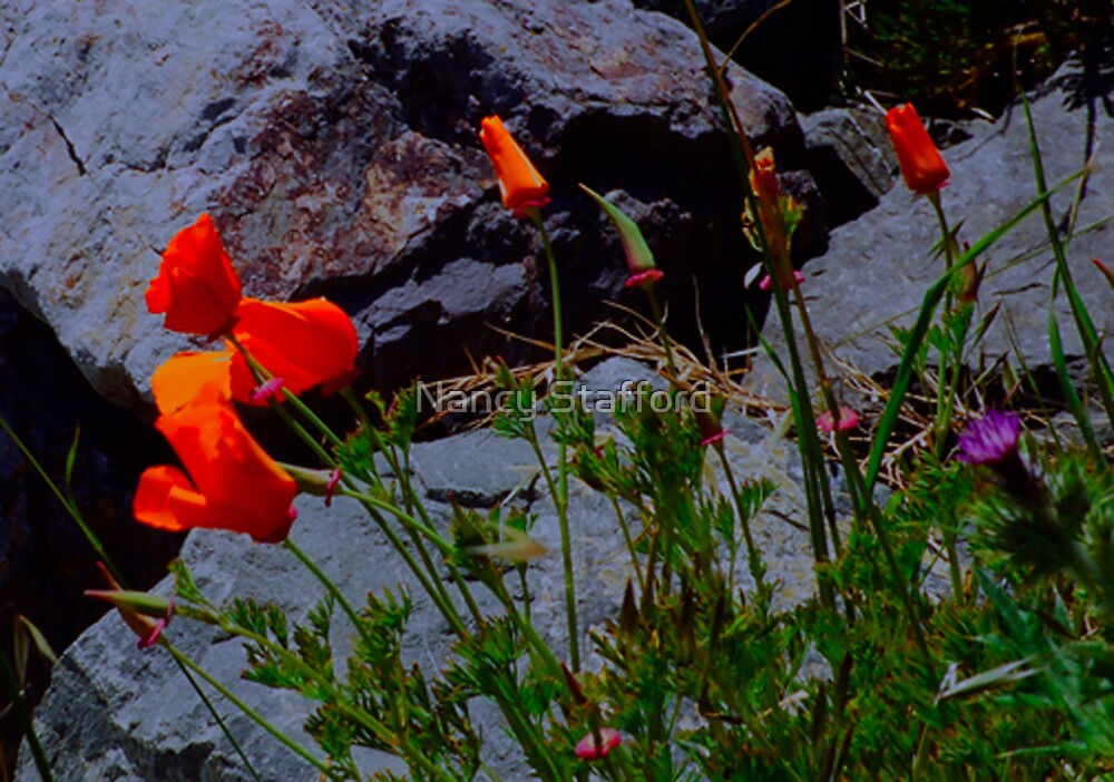 Rock Flowers. by Nancy Stafford
