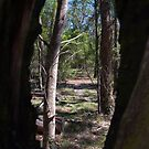 Tree Frame by Liz Worth