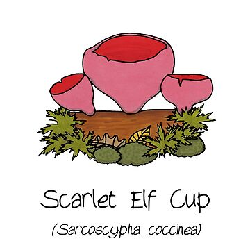 Scarlet Elf Cup - without smiley face by Immy