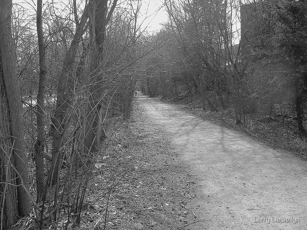 A Path..... by Larry Llewellyn