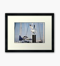Survival of the fittest Framed Print
