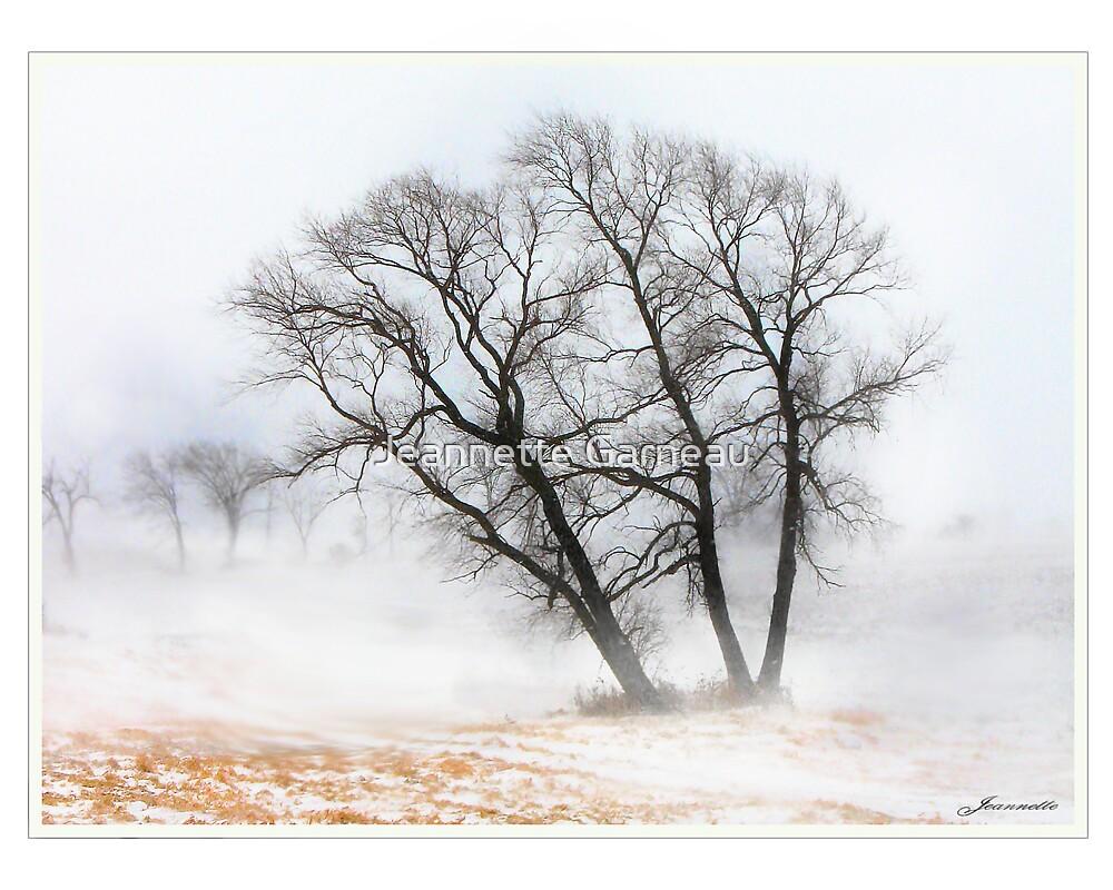 Winter Dream by Jeannette Garneau