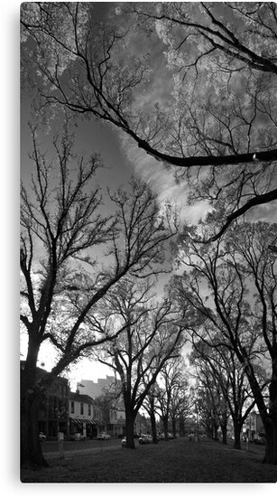 Autumn morning in McCarthur Park by Ashley Ng