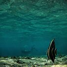 looking for the diver by tomasalma