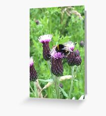 Bee and Thistle Greeting Card