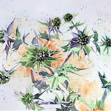 Spikey Sea Holly by Hillybobs