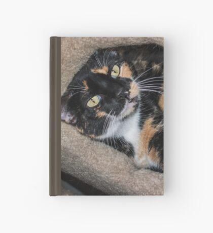 Taffy liebt ihre Kätzchenwohnung Notizbuch