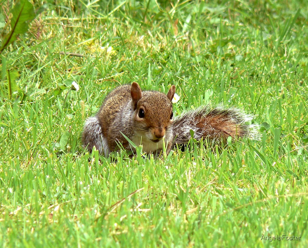 baby squirrel on garden by AngelaFoster