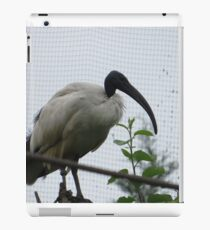 Request, Dares. Glossy Ibis Panington Zoo iPad Case/Skin