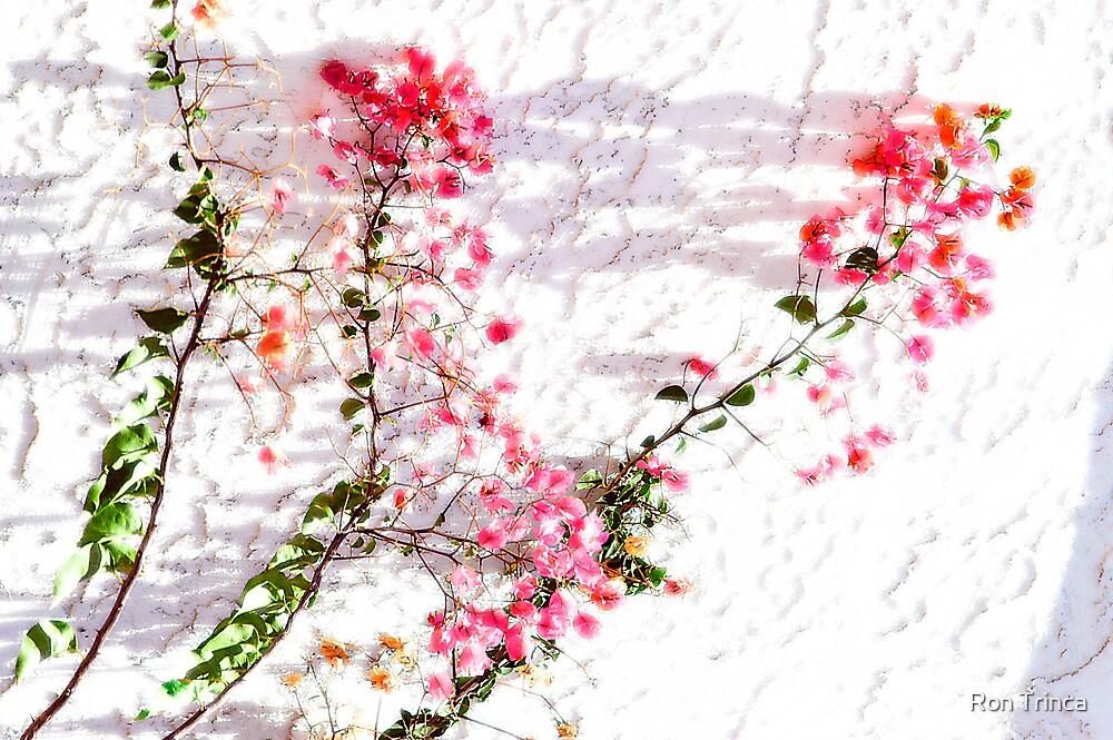 wall flowers-arizona by Ron Trinca