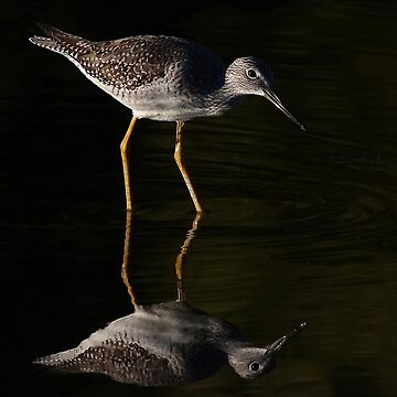 Greater Yellowlegs Reflects by darby8