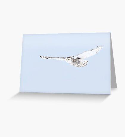 Glider - Snowy Owl Greeting Card