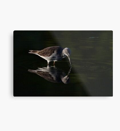 Greater Yellowlegs reflects Metal Print