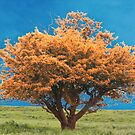 The Tree by Chris  Munday
