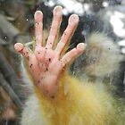 Halt! Hand des bolivianischen Eichhörnchen-Affen, Wellington Zoo von sandysartstudio