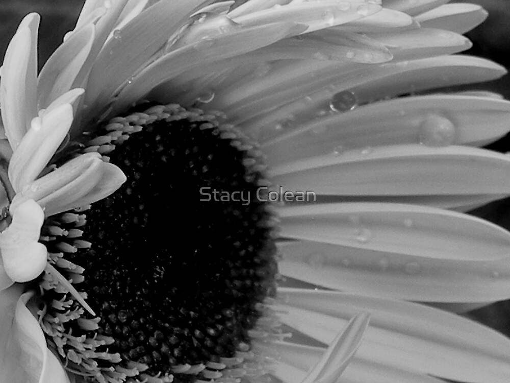 Soft and Strong by Stacy Colean