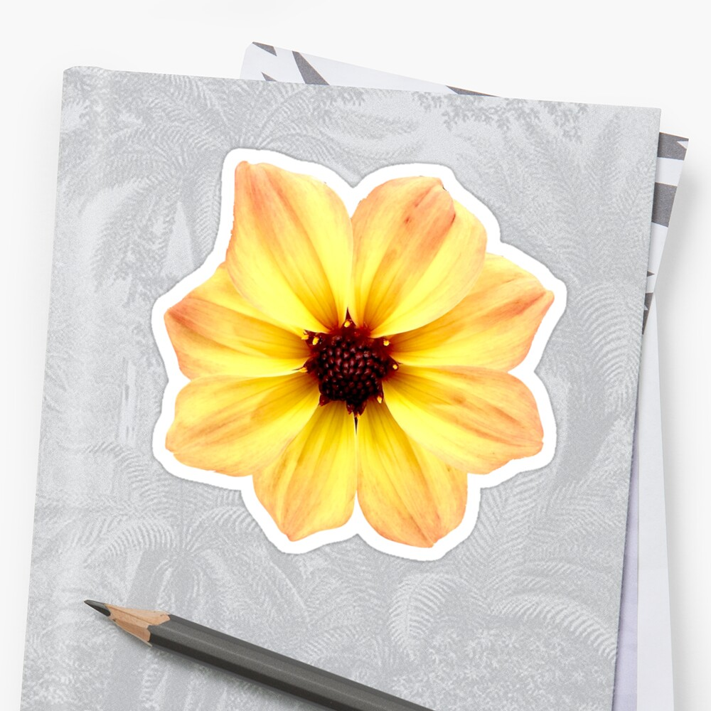 Beautiful Orange and Yellow Flower Sticker by Claire Andrews