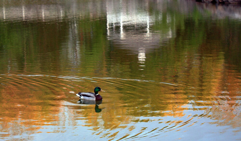 Pond & Duck by GroveDawg