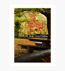 Autumn Canopy Art Print