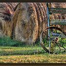 Wagon Wheel by Sheryl Gerhard