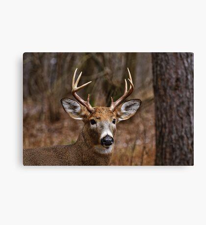 Deer Buck - Ottawa, Ontario - 1 Canvas Print