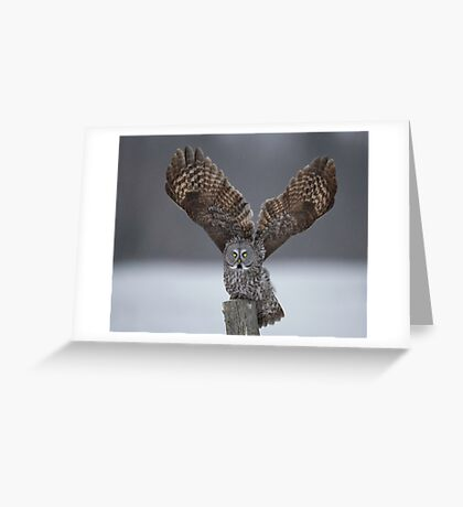 Mighty wings... Greeting Card