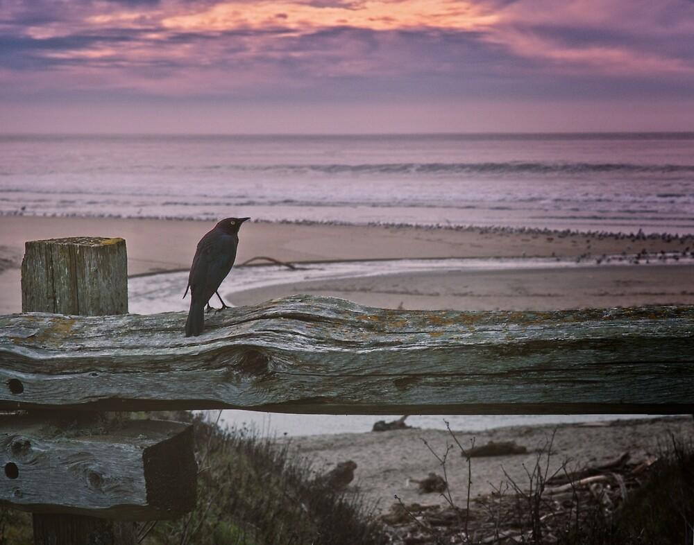 Bird on a fence at Carmel Beach by Yukondick