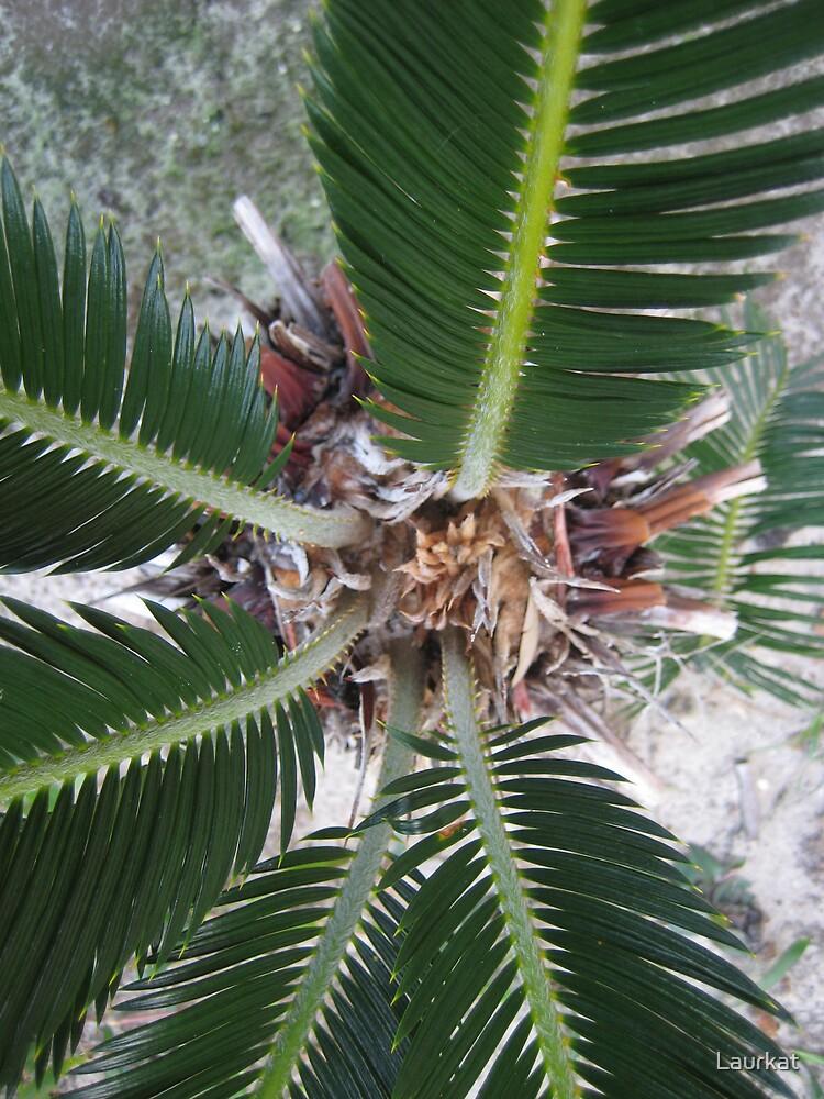 palmheart from below by Laurkat
