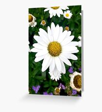 Daisy Close Up Image Greeting Card