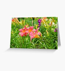 blushing lilies Greeting Card