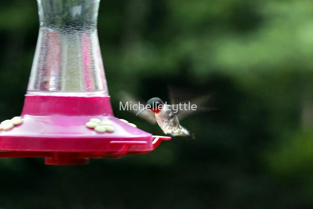 Humming bird II by MichelleLyttle