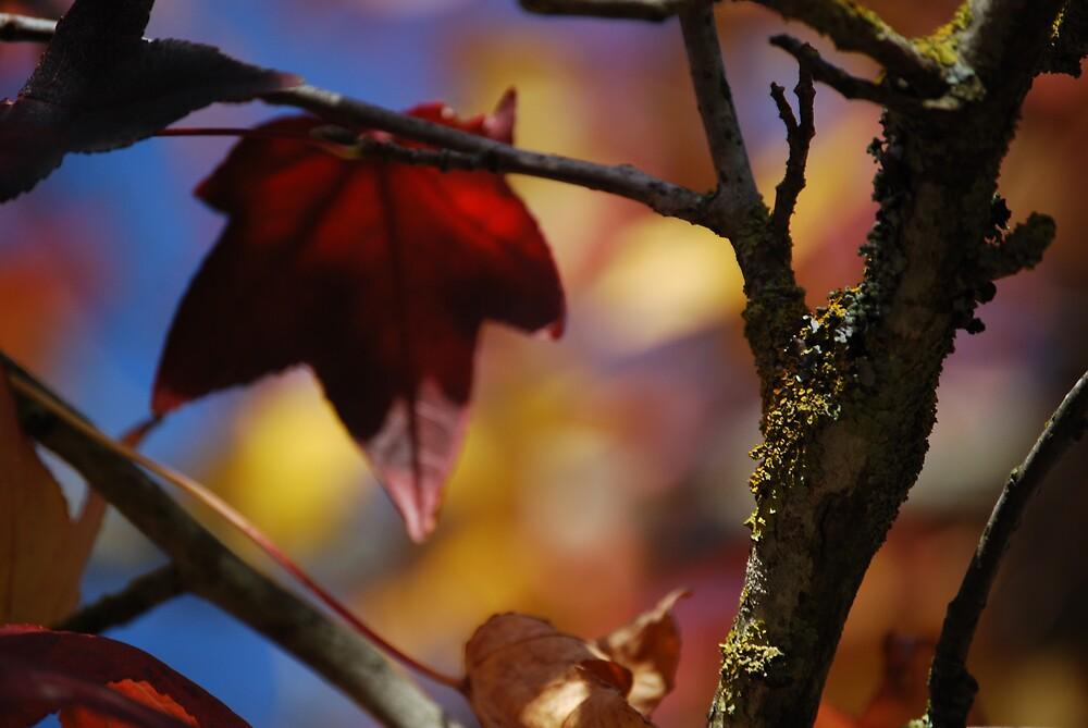 Autumn Haze by Princessbren2006