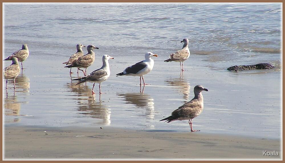 Seagulls Reflecting by Koala