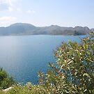Oleander Againt The Aegean near Selimiye by taiche