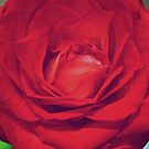 Rose Red by lindsycarranza