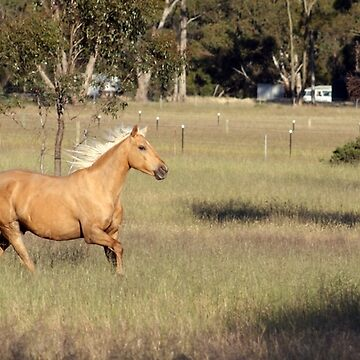 Racing through the grass by daverach1