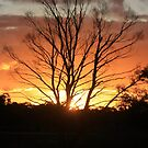 sunset in trees by Rachael Taylor