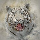White Tiger by Brian Tarr