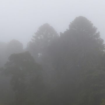Fog at the Bunya Mountains by annyarden