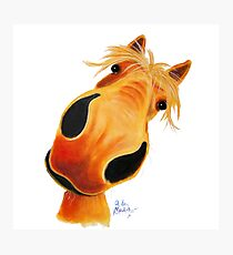 Happy Horse 'Paddy Pineapple' by Shirley MacArthur Photographic Print