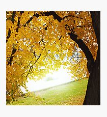 Fall concept, autumn nature in city park outdoors Photographic Print