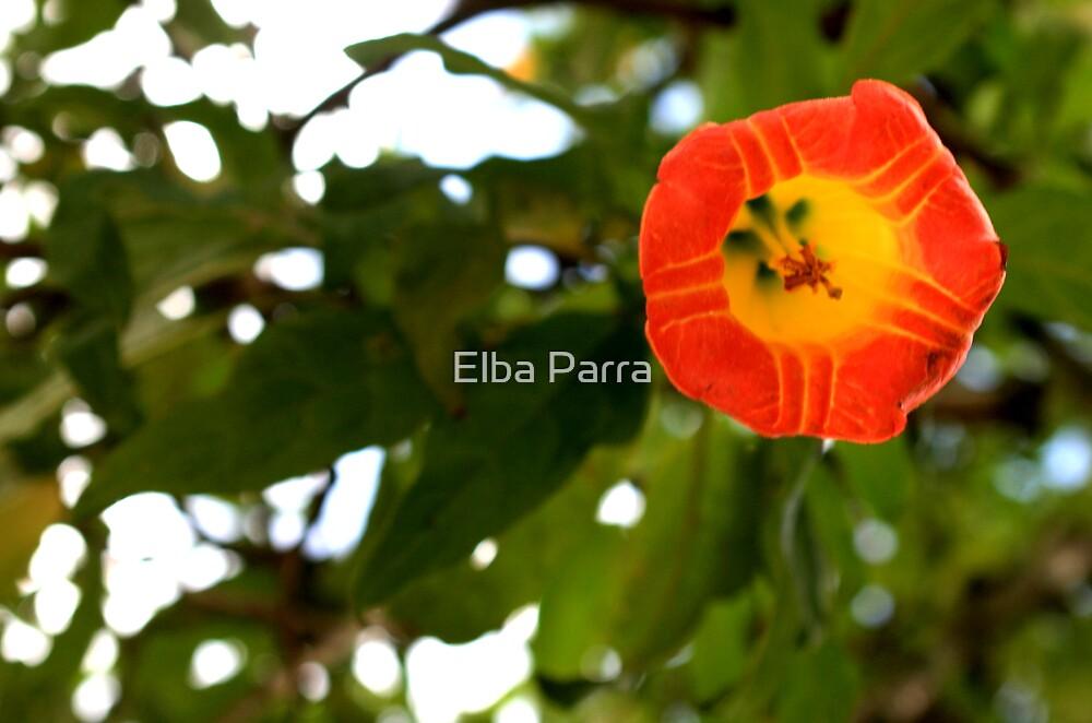 Orange Shine by Elba Parra