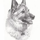 norwegian elk hound drawing by Mike Theuer