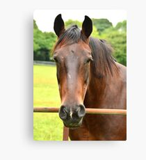My Kingdom for a Horse !! Canvas Print