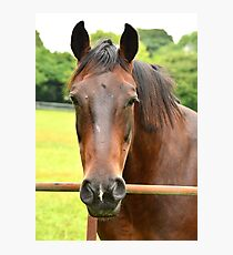 My Kingdom for a Horse !! Photographic Print