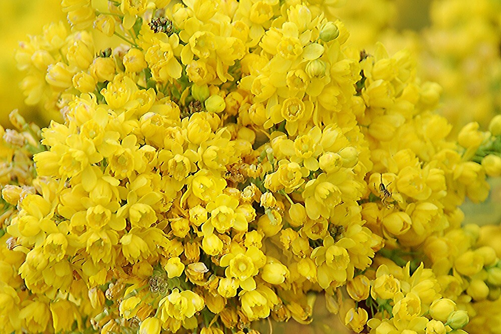 Yellow sea of small flowers by Arie Koene
