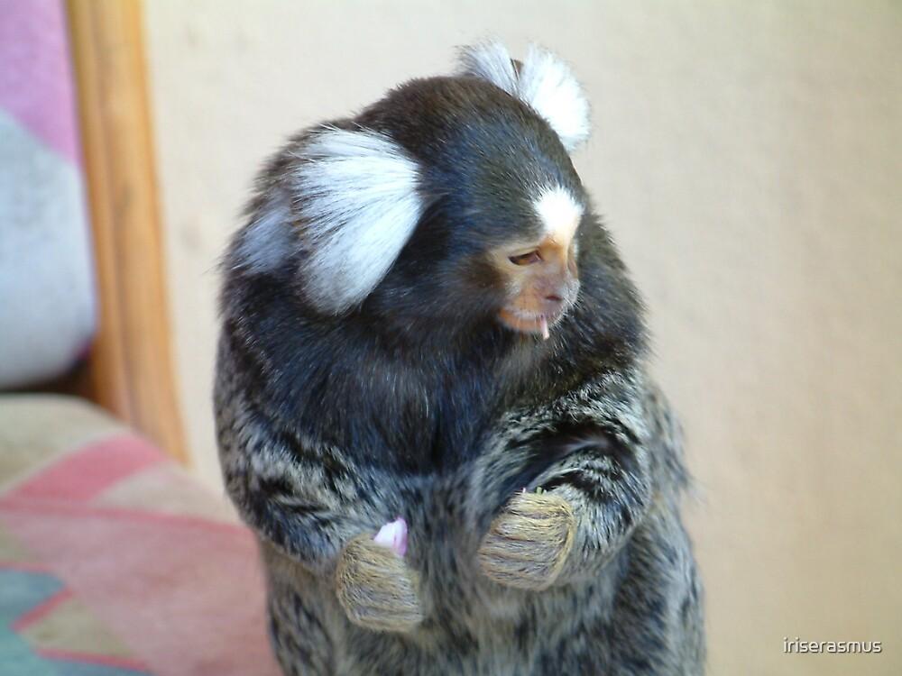 White Ear Marmoset by iriserasmus