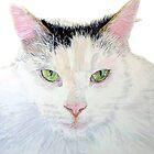 Sierra the Cat by Yvonne Carter