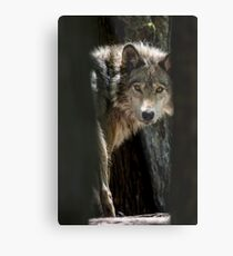Wolf In Forest Metal Print