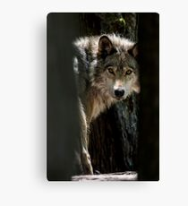 Wolf In Forest Canvas Print